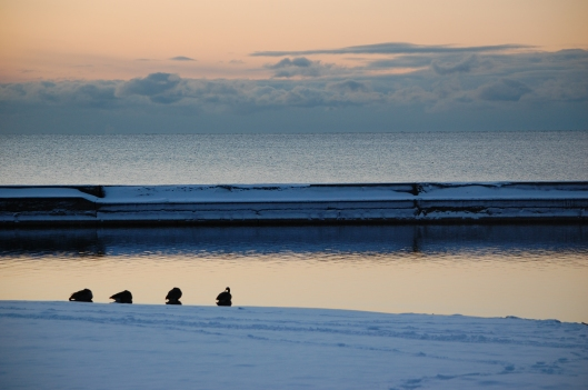 Birds nestle on the shore of Lake Ontario, just west of Sunnyside Pavillion